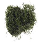 Mousse de jungle 20 g Vert