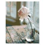 Peinture par numéros Fleur Blanche